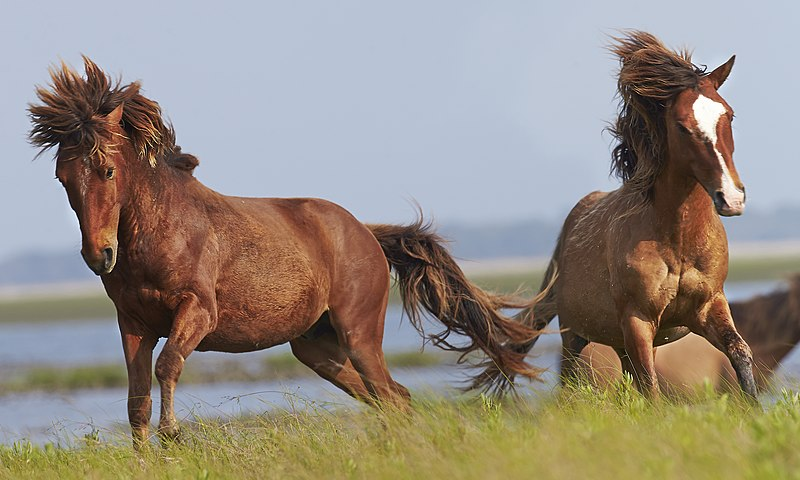 File:Wildlife (Horses in France).jpg