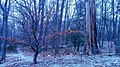 Winter At Mystic River Reservation 1 (196778865).jpeg