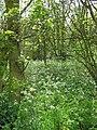 Woodland near Brackenholmes - geograph.org.uk - 1321612.jpg