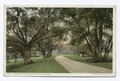 Woodward Willows, Stockbridge, Mass (NYPL b12647398-74020).tiff
