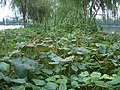 Wuhan - East lake causeway bean garden 4210.jpg