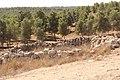 Yatir Forest IMG 7876.JPG