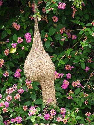 Nest - A bird nest