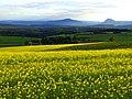 Yellow And Green - panoramio (1).jpg