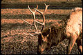 Yellowstone National Park YELL4575.jpg