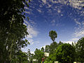 Yercaud - Blue Sky.jpg
