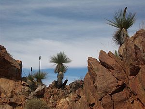 Yudnamutana, South Australia - Exotic outback vegetation on the crests east of Yudnamutana.