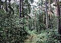 Zhukovskiy, Moscow Oblast, Russia - panoramio (35).jpg
