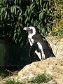 Zoo Berlin Pinguin.jpg