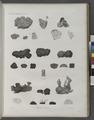 Zoologie. Zoophytes. Éponges à réseau (NYPL b14212718-1268614).tiff