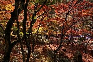 神戸市有馬温泉郷内にある瑞宝寺公園の紅葉