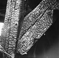 """""""De Koperslager"""" na de brand 29 juli 1964 stijl met korbeel in onderachterkant - Zaandijk - 20219445 - RCE.jpg"""