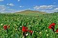 (((مناظر زیبای اطراف جلدیان ))) - panoramio (1).jpg