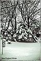 (348 365) Winter Snow Scene Sketch in B & W (24366150524).jpg