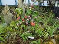 (Jardín Botánico de Quito) pic b6b.JPG