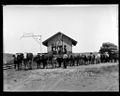 (Unloading wool from bullock train at railway siding near Carcoar, New South Wales, ca. 1900) (9445624819).jpg