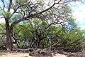 @ La Perouse Bay, Makena, Maui, Hawaii - panoramio.jpg