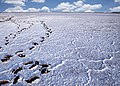 Λίμνη αλυκή Λήμνος.jpg