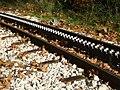 Οι σιδηροτροχιές του οδοντωτού στον Βουραϊκό.jpg