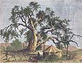 Авраамів дуб близько 1875.jpg