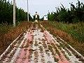"Аллея в межрядьи яблоневого сада - приводит к знаку-паятнику ""дуги Струве"" - panoramio.jpg"