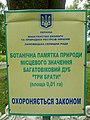 Багатовіковий дуб «Три брати», Прилуцький район, сел. Линовиця 74-241-5027 03.jpg