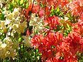 Ботанічний сад ім. М.Гришка IMG 9052.jpg