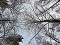 Бутовский лес в Северном Бутово-2.jpg