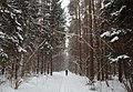 В зимнем лесу - panoramio.jpg