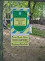Дуб на Петропавлівській, м. Суми, вул Петропавлівська, 102.JPG