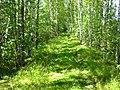 Зеленый ковер. Зеленые стены. Зеленый потолок - panoramio.jpg