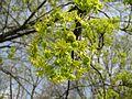 Парк «Відрадний» IMG 5546.jpg