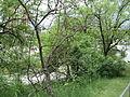 Парк шума Гази Баба во мај (188).JPG