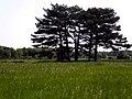 """Пейзажна композиція """"Вгадай кількість дерев?"""".jpg"""