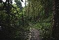 Первобытный лес.jpg