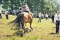 Полонинське літо 2012 (8414092081).jpg