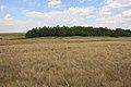 Степной перелесок - panoramio (1).jpg