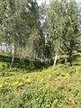 Терраса Исети в Ингальской долине (4).JPG