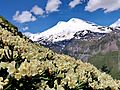 Цветы - panoramio (2).jpg