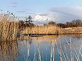 Шебекино - panoramio (2).jpg