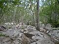 Ялтинський природний заповідник.jpg