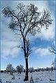 درختی استوار - panoramio.jpg