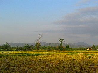 Gilan Province - Rice cultivation in Lahijan, Gilan