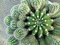گلخانه کاکتوس دنیای خار در قم. کلکسیون انواع کاکتوس 09.jpg