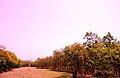 বসন্তকালে ভাওয়াল জাতীয় উদ্যান । Bhawal Forest in Spring.jpg