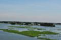 মেঘনা নদী 3.png