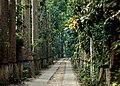 লাউয়াছড়া উদ্যানের প্রবেশপথ.jpg