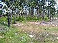 """ก่อนเป็น""""สวนสุนนท์กุล """"บ้านแก่งเค็ง - panoramio (4).jpg"""