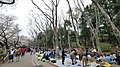 井の頭公園 - panoramio (55).jpg