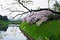 千鳥ヶ淵 - panoramio.jpg